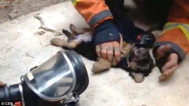 bombeiro-boca-boca-cachorro-1