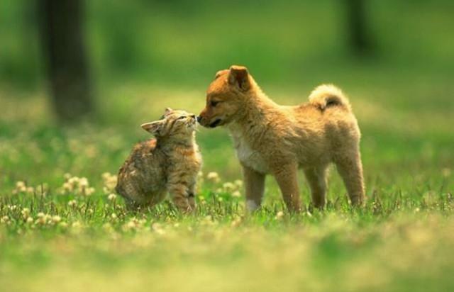 Dicas para apresentar um cachorro e um gato