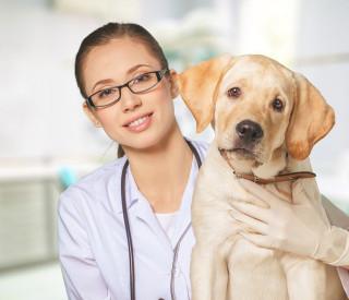 Com que frequência levar o seu pet ao veterinário?