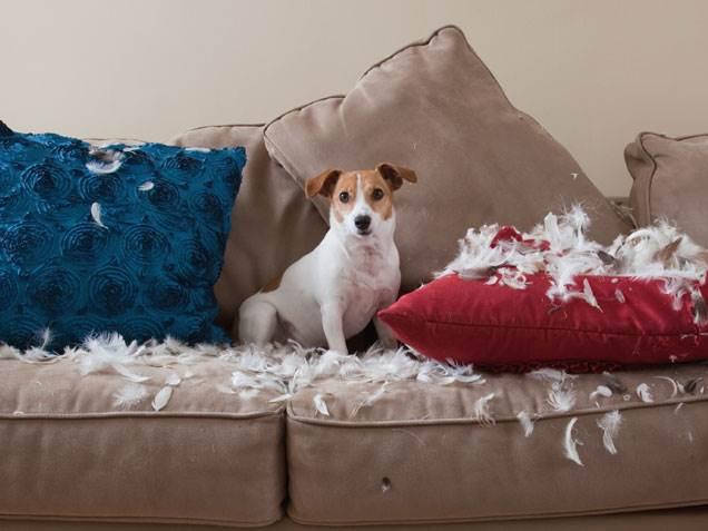 Como lidar com cachorros com comportamento destrutivo