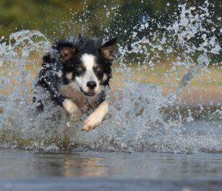 É possível acostumar o cachorro com a água?