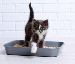 O gato não usa a caixa de areia: O que fazer?