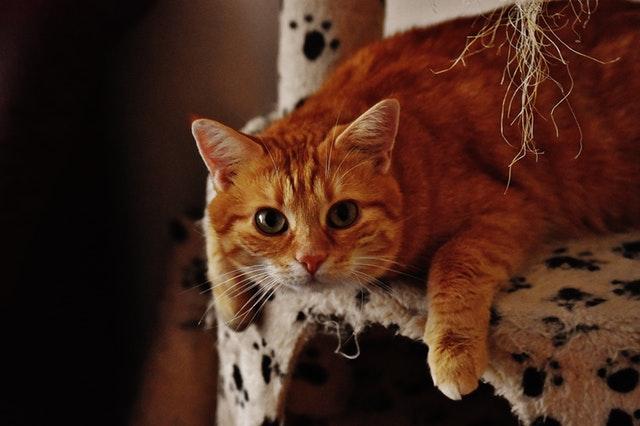 Meu gato adora brincar de madrugada. O que fazer?