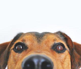 Técnicas para acalmar um cão tímido ou estressado
