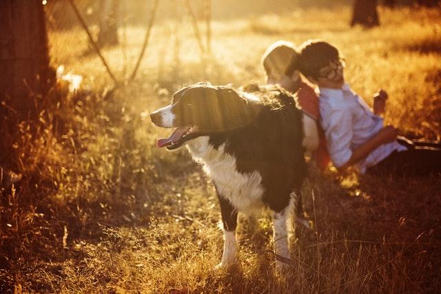 Como acostumar cachorros e crianças a conviverem
