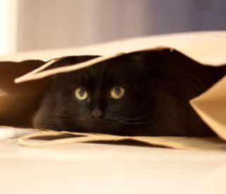 Meu gato fica ansioso quando viajo, o que fazer?