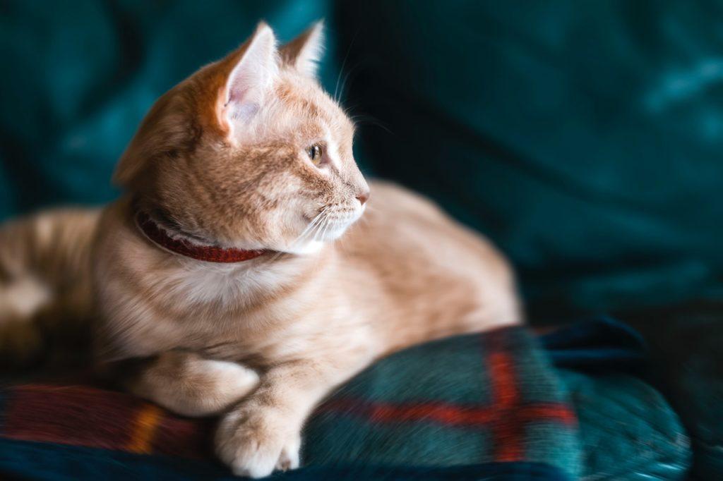 As mudanças de temperatura e os gatos – Quais cuidados tomar
