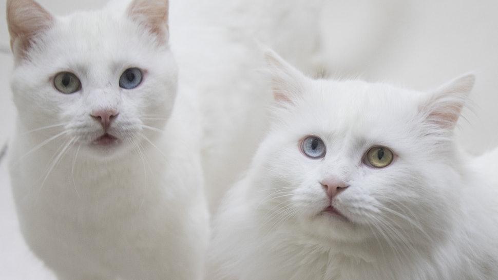 Dicas para entender melhor os seus gatos