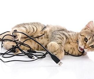 Como proteger os fios dos pets
