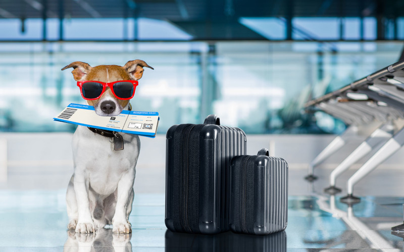 Viajar de avião com cachorro: Dicas e Cuidados - Porto Filhote