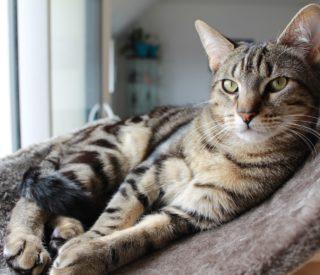 Dicas para criar gato em apartamento