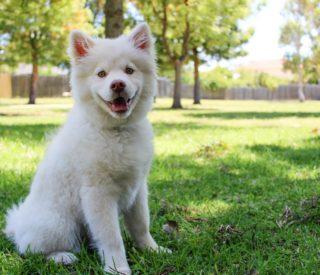 Como ajudar o seu cachorro a perder peso